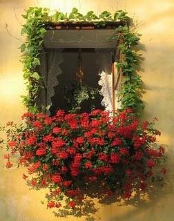 El cuidado de las plantas y el jardin plantas colgantes for Plantas para jardineras al sol